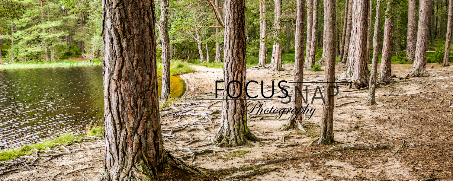 Focus Snap Photography